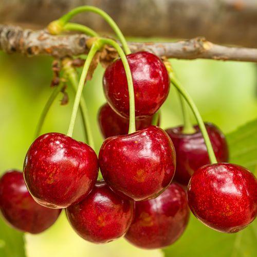 Mansfields Staccato Cherries